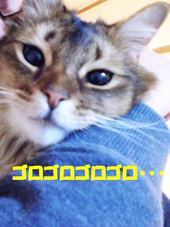 CIMG0501.jpg
