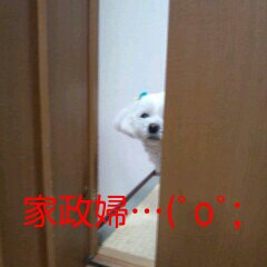 家政婦の犬。。。