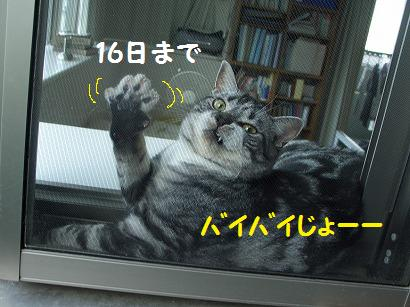 s-ねこ813 066