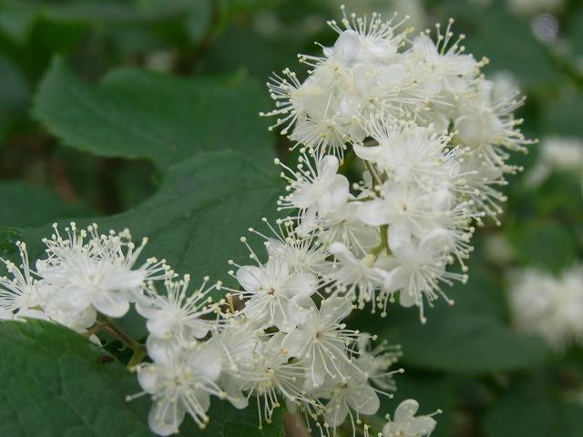 azouji2011.6.19 185