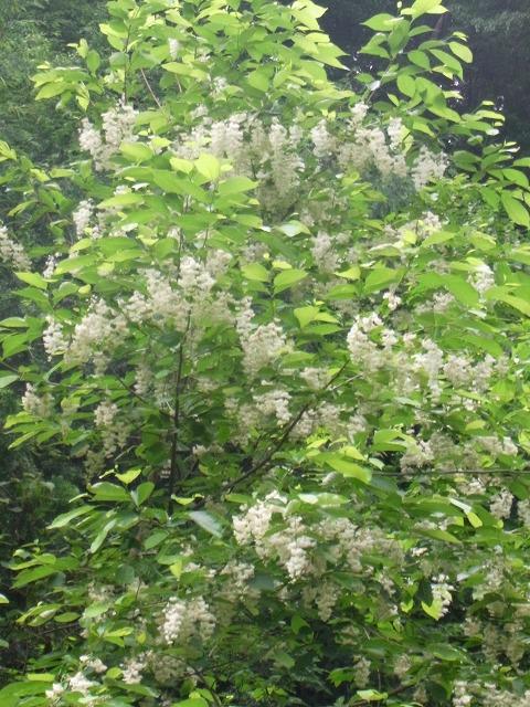 azouji2011.6.19 231