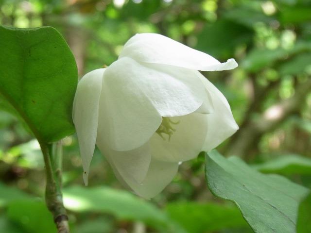 kanmuriyama2011.07 095