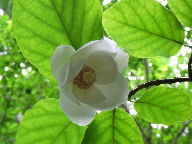 kanmuriyama2011.07 078