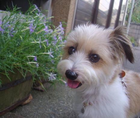 イトソマの花と