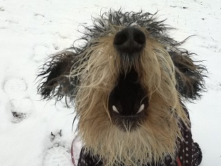 雪遊び、サイコー!!