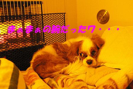 IMGP3666.jpg