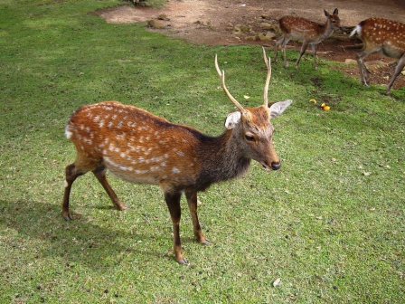 200927鹿