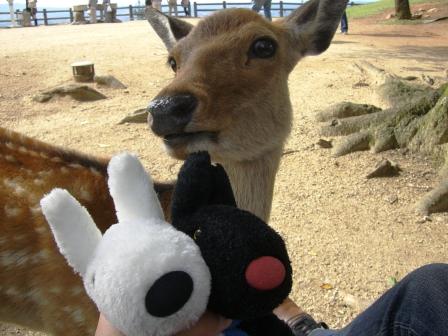200927リサガスと鹿