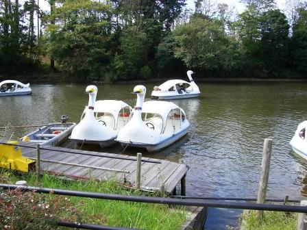 201012スワンボート