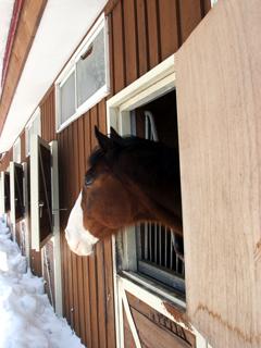 うま,ウマ,Horse