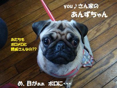 DSC07180 - コピー