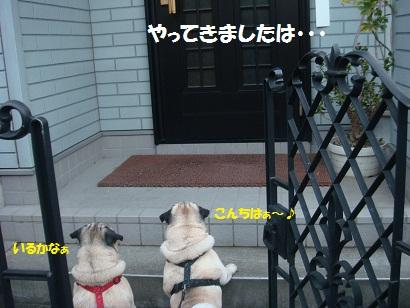 DSC02303_20110215041300.jpg