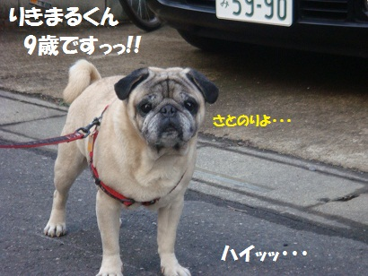 DSC02312_20110215041259.jpg
