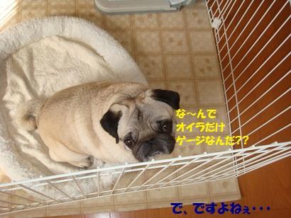 DSC03352_20110308201758.jpg