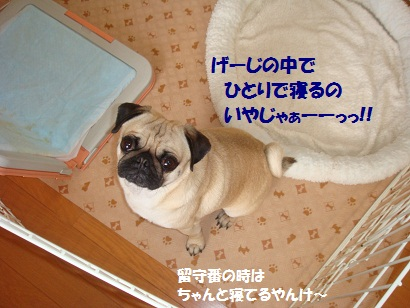 DSC03358_20110308201520.jpg