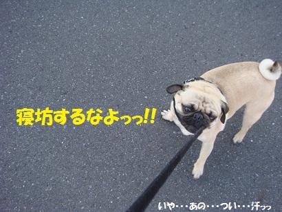 DSC03433.jpg