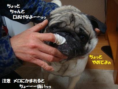 DSC03586_20110327161113.jpg