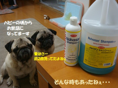DSC03598_20110327144303.jpg