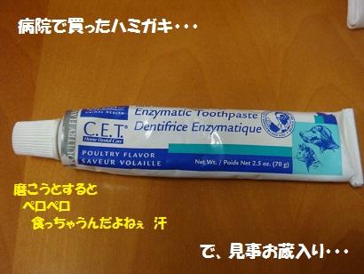 DSC03618.jpg