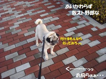 DSC03644_20110407005922.jpg