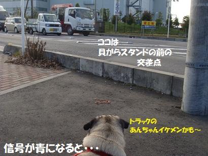 DSC04342_20110407010024.jpg