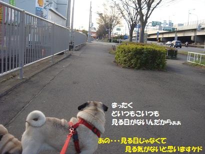 DSC04348.jpg