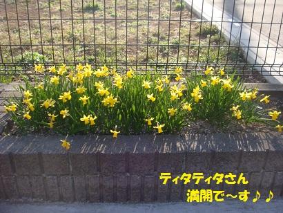 DSC04362_20110407012004.jpg