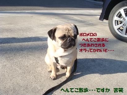 DSC04364_20110407014208.jpg