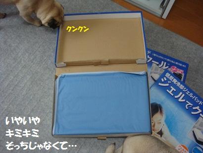 DSC04379.jpg