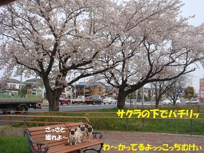 DSC04677_20110412211013.jpg