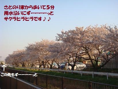 DSC04683_20110412211014.jpg