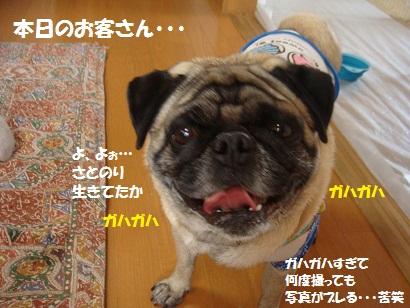 DSC04724_20110417163905.jpg