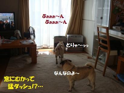 DSC04809_20110419174706.jpg