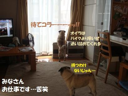 DSC04810.jpg