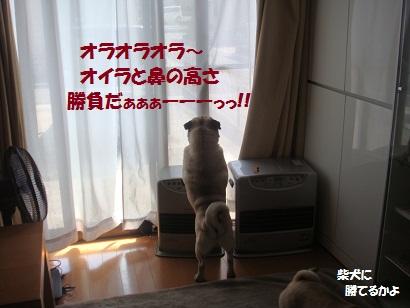 DSC04816.jpg