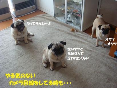 DSC04817_20110419174706.jpg