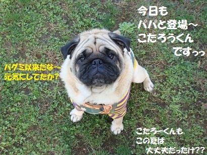 DSC07376_20110206014353.jpg