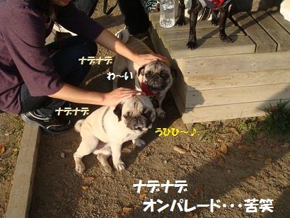 DSC07514_20110207010448.jpg