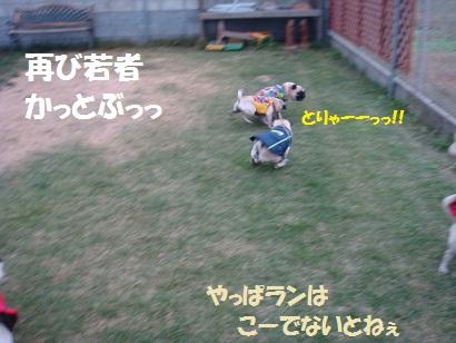 DSC07600.jpg