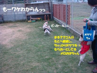 DSC07601.jpg