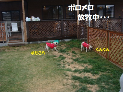 DSC07606_20110215020620.jpg
