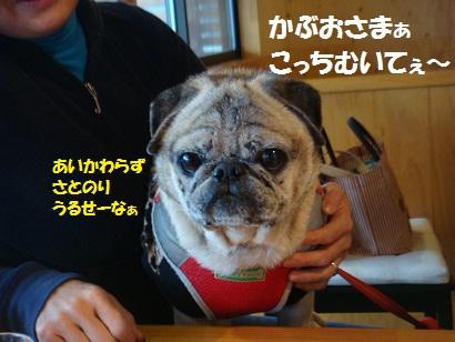 DSC07651.jpg