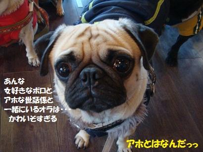 DSC07694_20110214214600.jpg