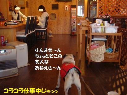 DSC07709_20110214213433.jpg
