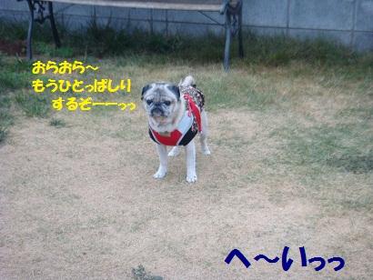 DSC07718_20110215014346.jpg
