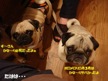 DSC07919_20110220225333.jpg