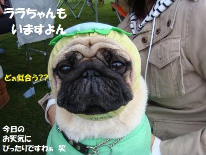 DSC08196_20110225010632.jpg
