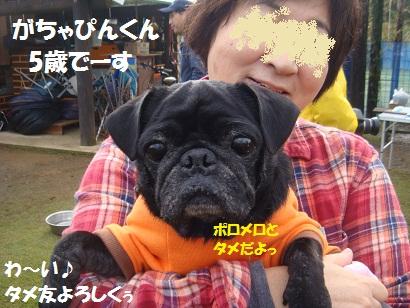 DSC08249_20110226040010.jpg