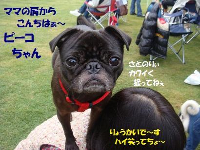 DSC08273.jpg