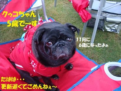 DSC08290_20110226033759.jpg